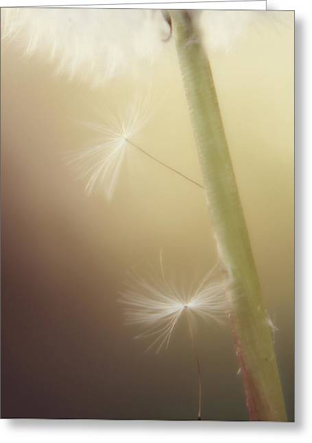 Greeting Card featuring the photograph A Wish And A Prayer by Amy Tyler