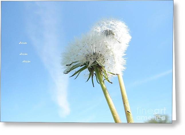 A Wish Blown Off To The Maker Greeting Card