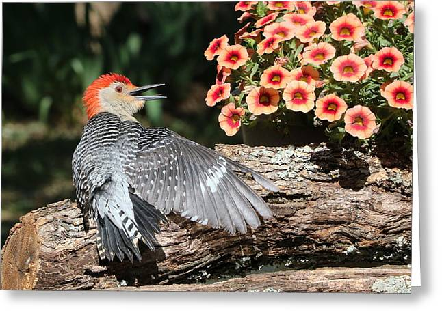 A Woodpecker Conversation Greeting Card