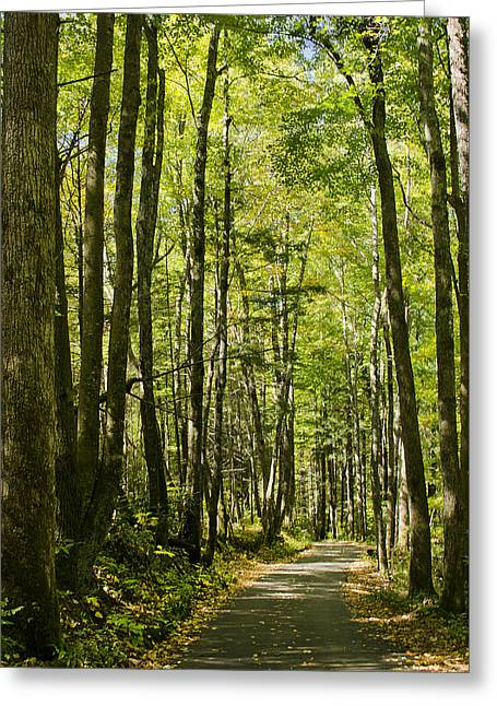 A Woodsy Trail Greeting Card by Wanda Krack