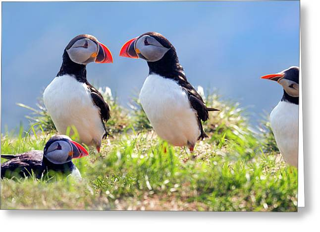 A World Of Puffins Greeting Card