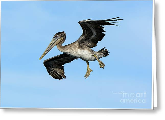 A Young Brown Pelican Flying Greeting Card