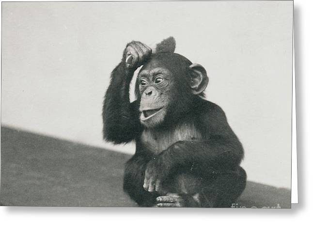 A Young Chimpanzee Playing With A Brush Greeting Card