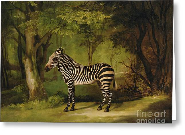 Tails Paintings Greeting Cards - A Zebra Greeting Card by George Stubbs