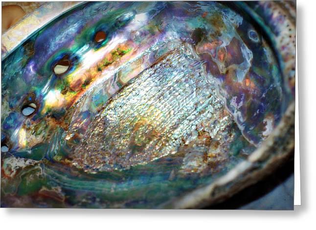 Abalone Greeting Card