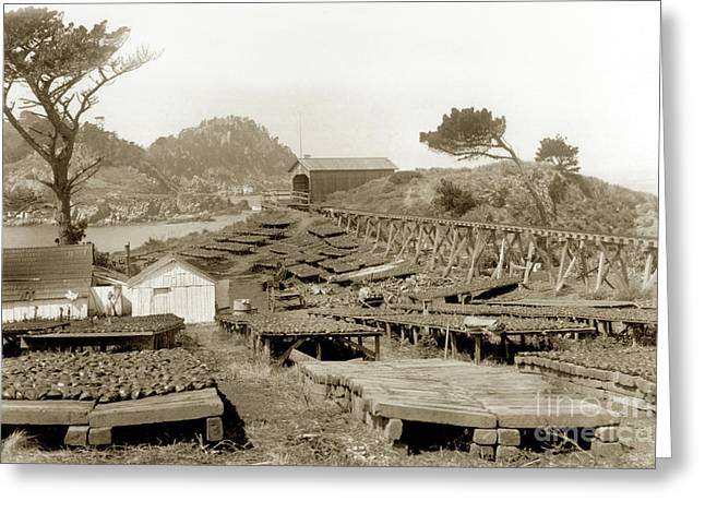 Abalone Drying Racks On Coal Chute Point Sept 19, 1905 Greeting Card