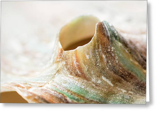 Abalone Landscape Greeting Card by Heather Applegate