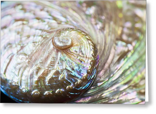 Abalone Shell Close-up Greeting Card by Bill Brennan - Printscapes