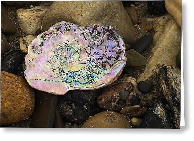 Abalone Shell Greeting Card by Ron Regalado