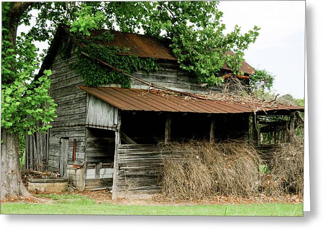 Abandoned Barn Southern Tennessee Greeting Card