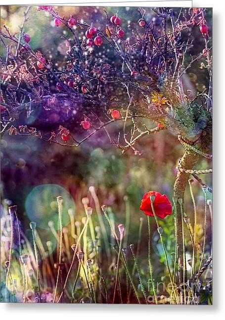 Abandoned Garden Greeting Card by Agnieszka Mlicka