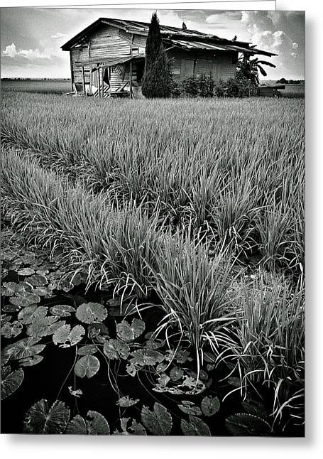 Abandoned House Greeting Card by Dave Bowman