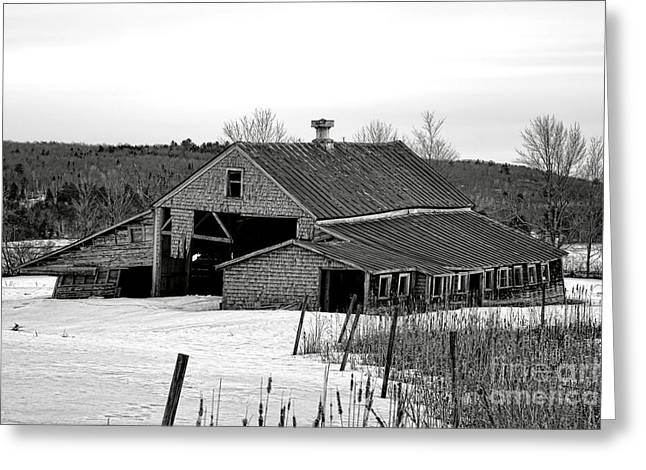 Abandoned Maine Barn In Winter Greeting Card