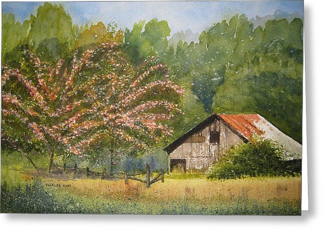 Abandoned Mimosas Greeting Card by Shirley Braithwaite Hunt
