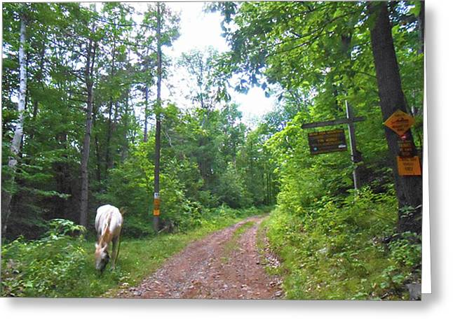 Abandoned Road Scenic Greeting Card by Patricia Keller