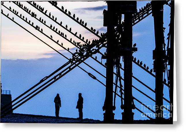 Aberystwyth Pier And Starlings At Dusk Greeting Card