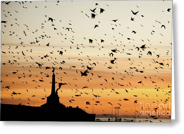 Aberystwyth Starlings At Dusk Flying Over The War Memorial Greeting Card