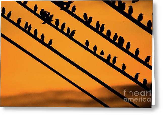 Aberystwyth Starlings At Dusk Greeting Card