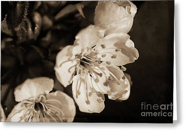 Greeting Card featuring the photograph Abiding Elegance by Linda Lees