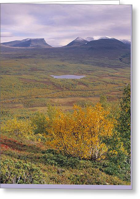 Abisko Nationalpark Greeting Card