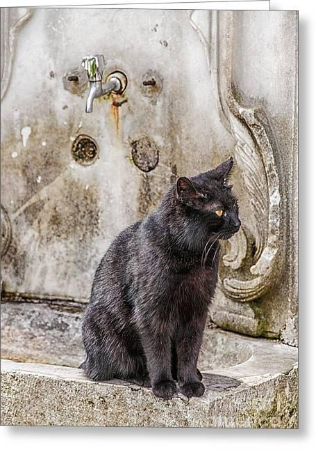 Ablution Taps Kitty Greeting Card