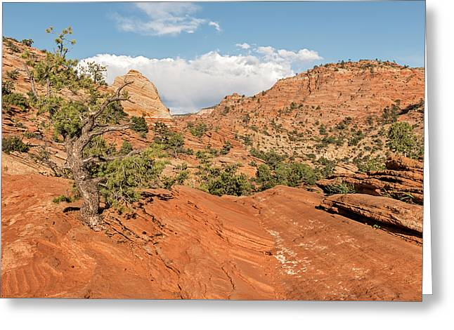 Above Zion Canyon Greeting Card by Loree Johnson