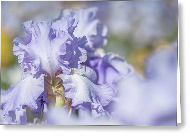 Absolute Treasure 1. The Beauty Of Irises Greeting Card