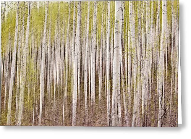 Abstract Aspens Greeting Card by Scott Pellegrin