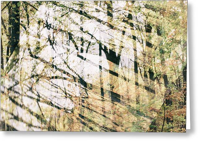 Abstract Autumn Woods Greeting Card by Mother Nature
