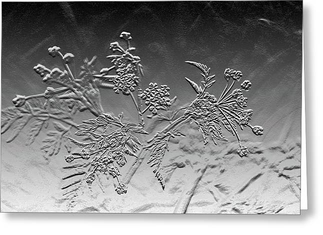 Abstract Black And White  Cow Parsley Greeting Card