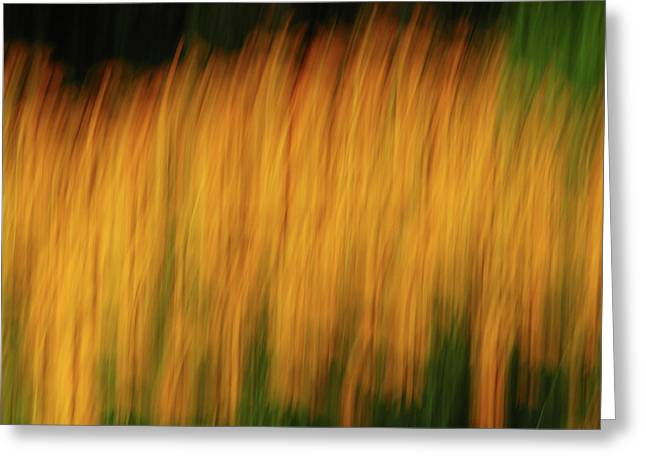 Abstract Black Eyed Susan Field Greeting Card by Juergen Roth