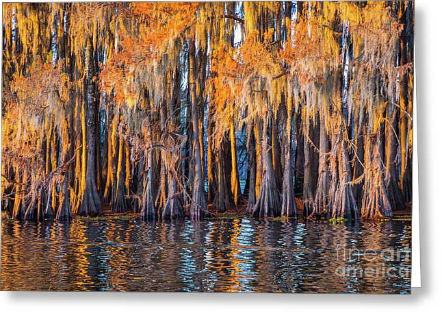 Abstract Caddo Trees Greeting Card