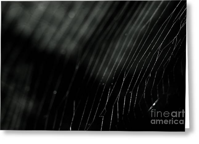 Greeting Card featuring the photograph Abstract Cobweb by Yurix Sardinelly