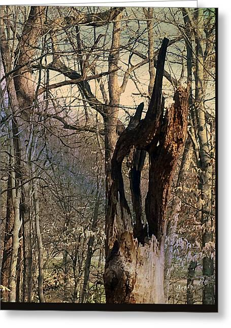 Greeting Card featuring the photograph Abstract Dead Tree by Robert G Kernodle