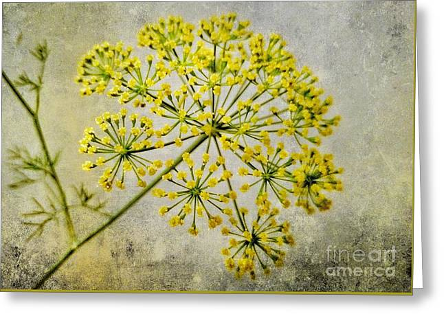 Attractive Dill Blossom  Greeting Card