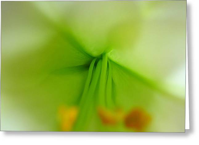 Abstract Easter Lily Petals Greeting Card by Juergen Roth