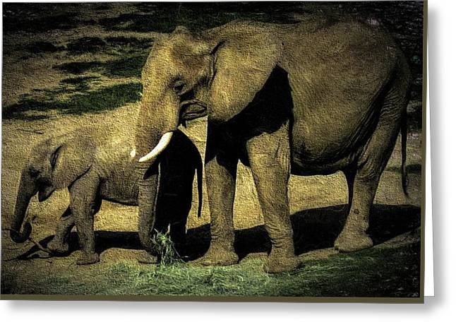 Abstract Elephants 23 Greeting Card
