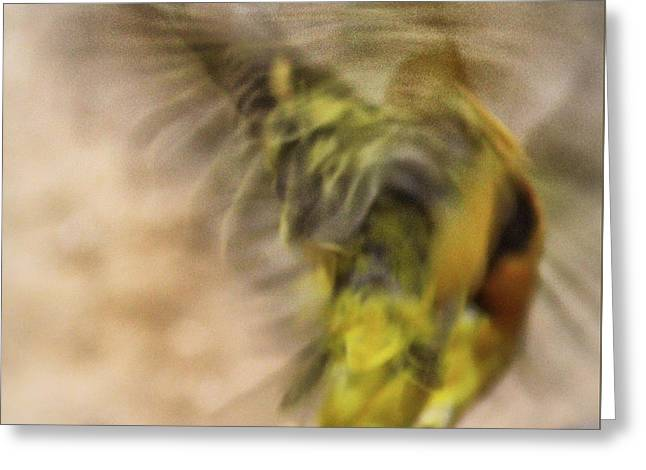 Abstract Finch Greeting Card