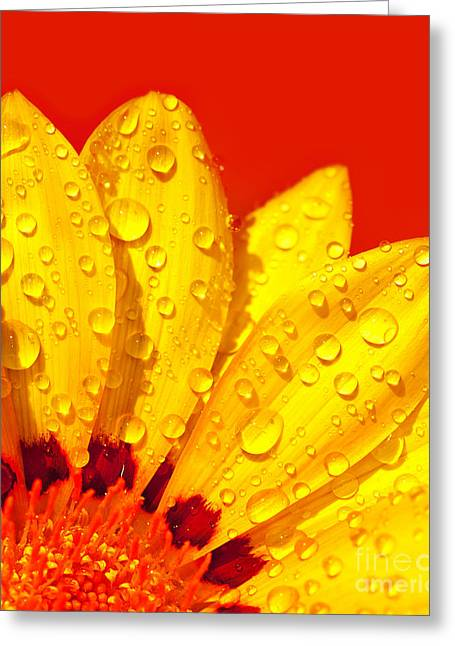Abstract Flower Petals Greeting Card