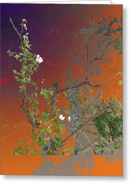 Abstract Flowers Of Light Series #13 Greeting Card