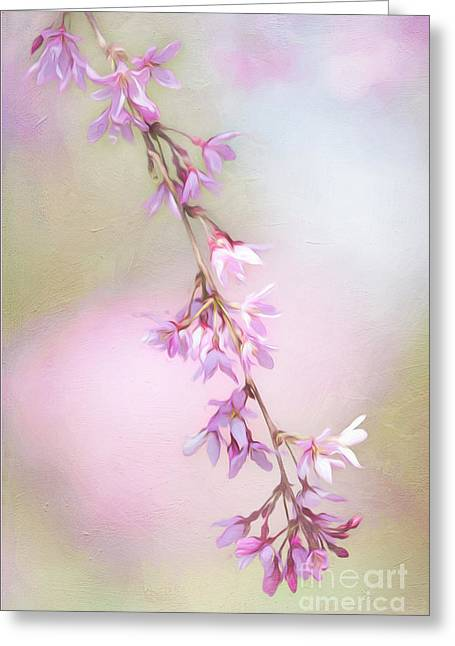 Abstract Higan Chery Blossom Branch Greeting Card