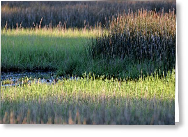 Greeting Card featuring the photograph Abstract Marsh Grasses by Bruce Gourley