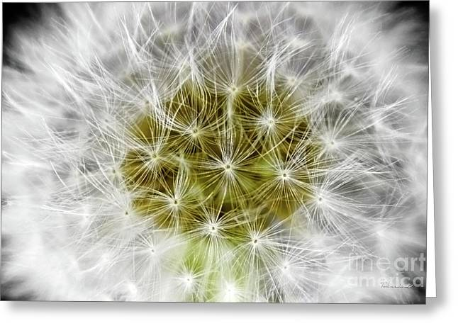 Abstract Nature Dandelion Floral Maro White And Yellow A1 Greeting Card