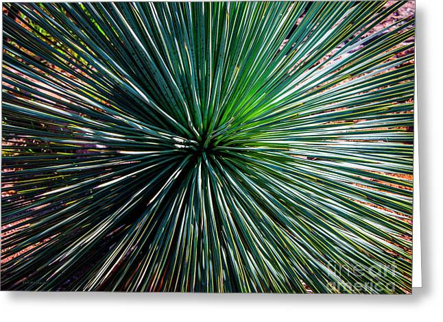 Abstract Nature Desert Cactus Photo 207 Blue Green Greeting Card