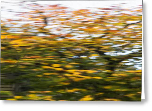 Abstract Of Maple Tree Greeting Card