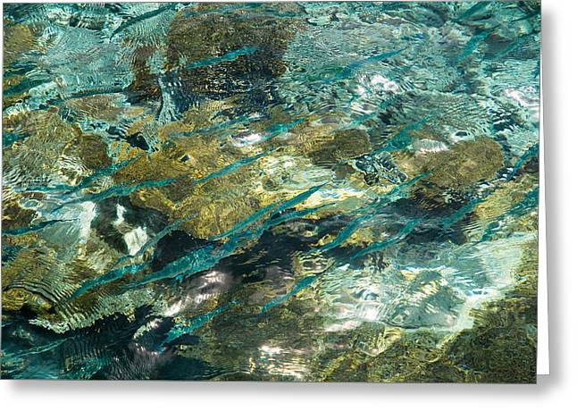 Abstract Of The Underwater World. Production By Nature Greeting Card by Jenny Rainbow