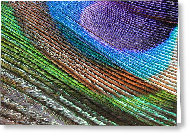 Abstract Peacock Feather Greeting Card by Angela Murdock