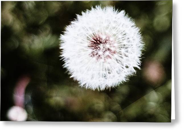 Abstract Seedhead - April 2014 Greeting Card
