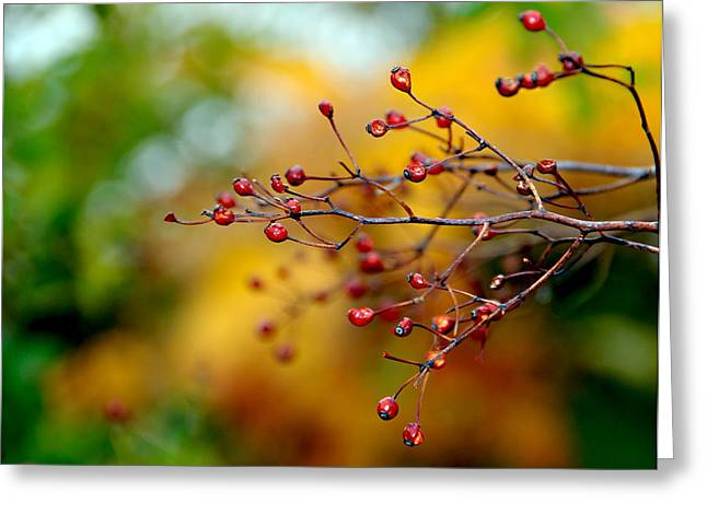 Abstract Tree Branch Greeting Card by JoAnn Lense