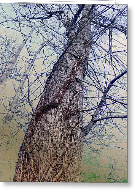 Greeting Card featuring the photograph Abstract Tree Trunk by Robert G Kernodle